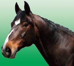 NATURAL LIFE Horse amino - Häst aminosyror pulver för hästar 1kg